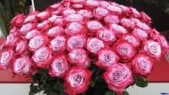 Розы. Пионы. Букеты. Аквабоксы. Горшечные растения.