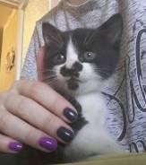 Отдам котенка