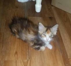 Котята очень красивые и приученные к лотку
