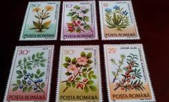 Румыния. 6 чистых марок 1993 г. Цветы. Полная серия. Отличный сохран!