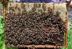 Мед, медовые продукты. Под заказ