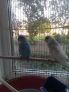 Попугаи.