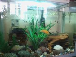 Возьму аквариум и обитателей