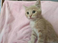 Персиковый котёнок в хорошие руки