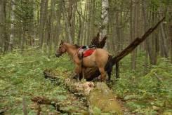 Конные прогулки, экскурсии в тайгу. Реликтовый лес. Седанка. 1500р