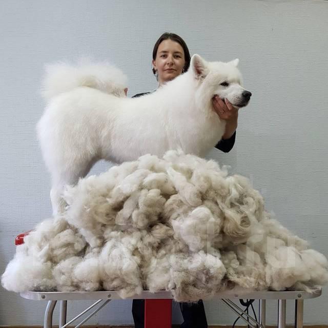 "Стрижка собак и кошек - Зоосалон ""Маэстро ГРУМ"""