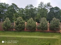 Продажа деревьев крупномеров.