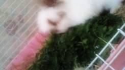 Вязка кроликов.