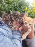 Отдадим котят в хорошие руки!
