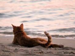 Турция. Кемер. Пляжный отдых