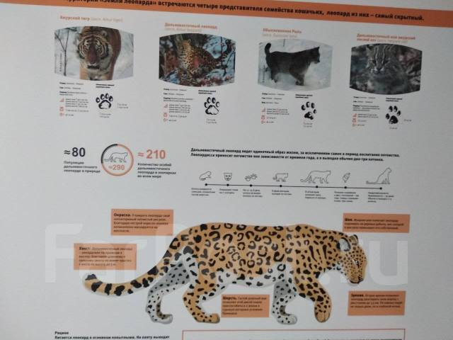 Теплое море + Тропа леопарда 25 ноября