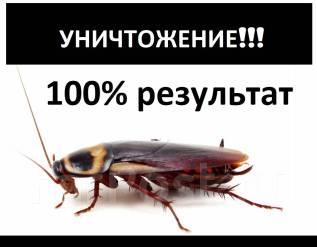 Дезинсекция, тараканы, клопы, блохи, шершни, осы, пчёлы, муравьи. Владивосток