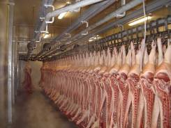 Мясо, свинина оптом
