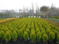 Растения для сада, семена для газона, рулонный газон, мульча кора