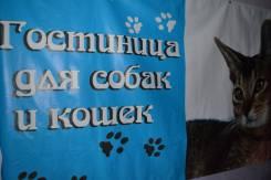 Гостиница для кошек и собак.