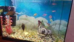 Стеклянный аквариум с рыбками.