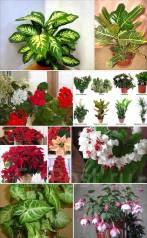 Возьму бесплатно комнатные цветы.