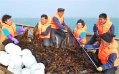 Сотрудники на завод по сбору и упаковке морской капусты!