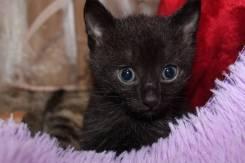 Котёнок Владивосток