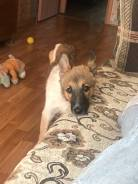 Отдам щенка 4 месяца
