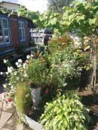 Продам дачу с баней, садом, водоемом в п. Новый. От агентства недвижимости (посредник)