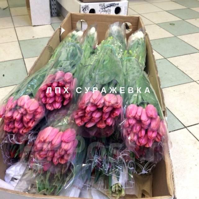 Цветы срезка оптом г. владимир — img 9
