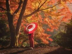 """Япония. Токио. Экскурсионный тур. Групповой тур в Японию """"Золотая осень"""""""