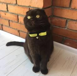 Скидка на кастрацию кота 20%