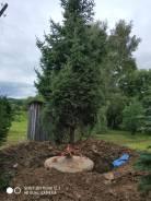 Профессиональная посадка деревьев крупномеров.