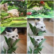 Кошка Айвори ищет дом