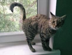 Кошка подросток бывшедомашняя мышеловка ищет дом