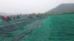 Сбор морской капусты в Южной Корее. Отправка паром и авиа