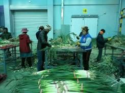 Сбор овощей и фруктов Ю. Корея. Мужчины и не тяжелая женская работа.