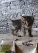 Котенок - крысолов (девочка)