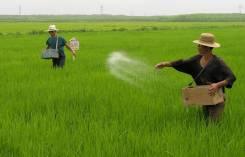 Требуются мужчины и женщины на сельхоз работы в Южную Корею город Янгу