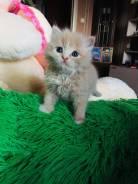 Котик (персик) в добрые руки. отдаём, причина аллергия (