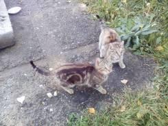 Кошки порода крутая