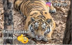 "Милоградовские водопады. Нац. парк ""Зов тигра"""