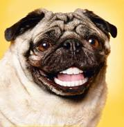 Чистка зубов собак ультразвуком