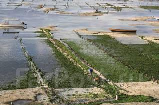 Женщины и семейные пары на работу в Корею! Упаковка морской капусты