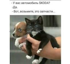 Отдам котёнка в хорошии руки