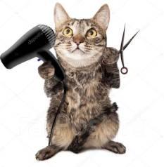 Экспресс стрижка кошек 30 минут, выезд на дом, 1400 рублей