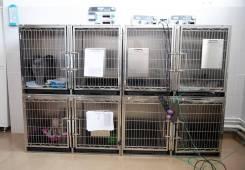 Ветеринарные услуги - Кардиолог для животных в Уссурийске