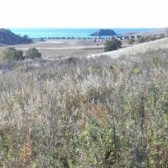 Продам земельный участок в п. Зарубино в Хасанском районе. 2 500кв.м., собственность, от частного лица (собственник)
