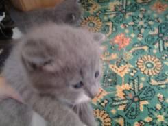 Милый котёнок в добрые руки