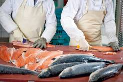 Рыбообработчик. Ип Парус. П.о Камчатка