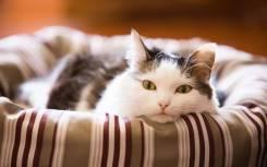 Гостиница для котов и кошек
