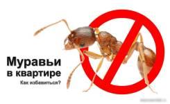Дезинсекция от муравьев, профессиональная обработка