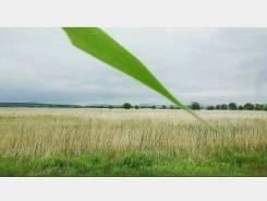Аренда земли сельхозназначения 7,4 га. 30 км. от Владивостока