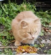 Ищем хозяина котенку